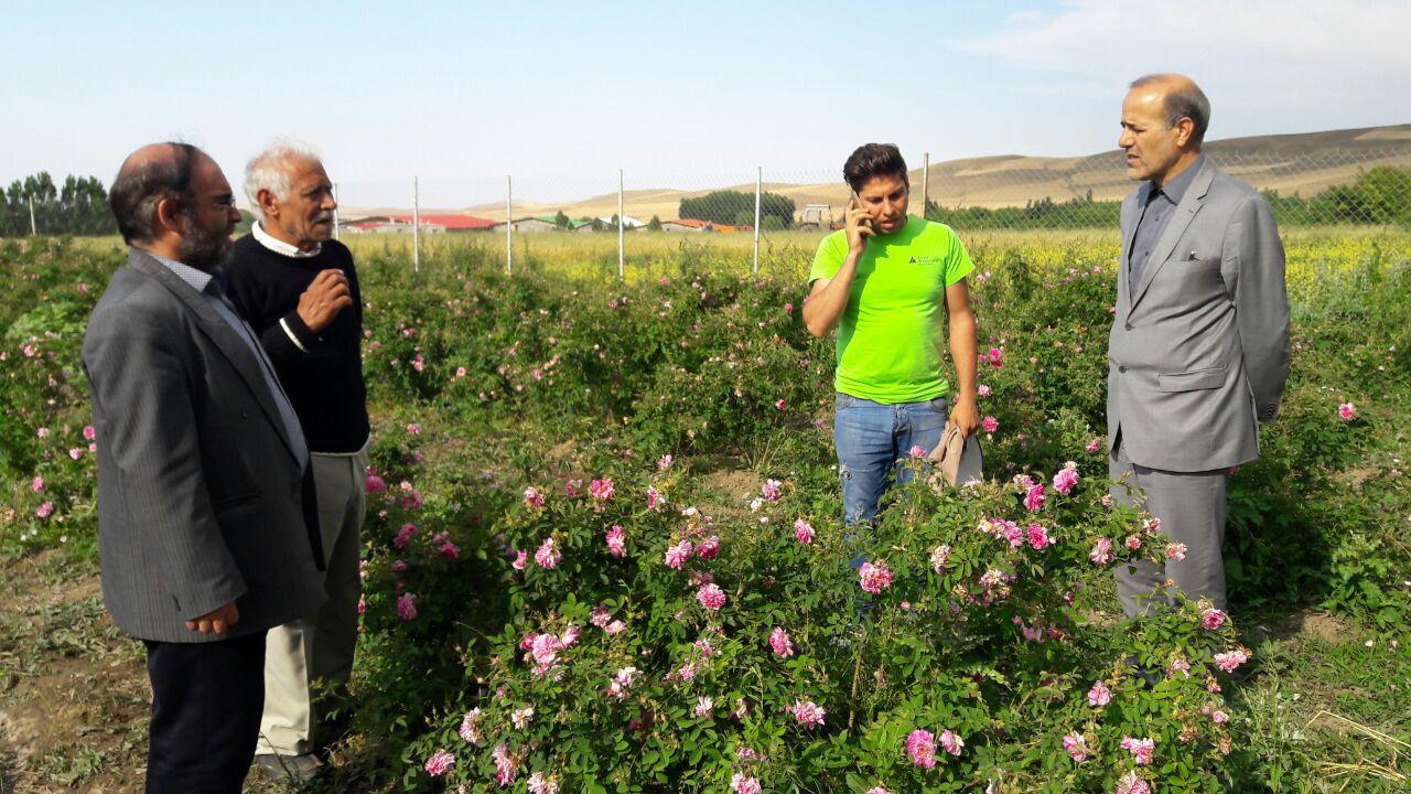 لزوم پیاده سازی سیاست هر روستا یک محصول در منطقه