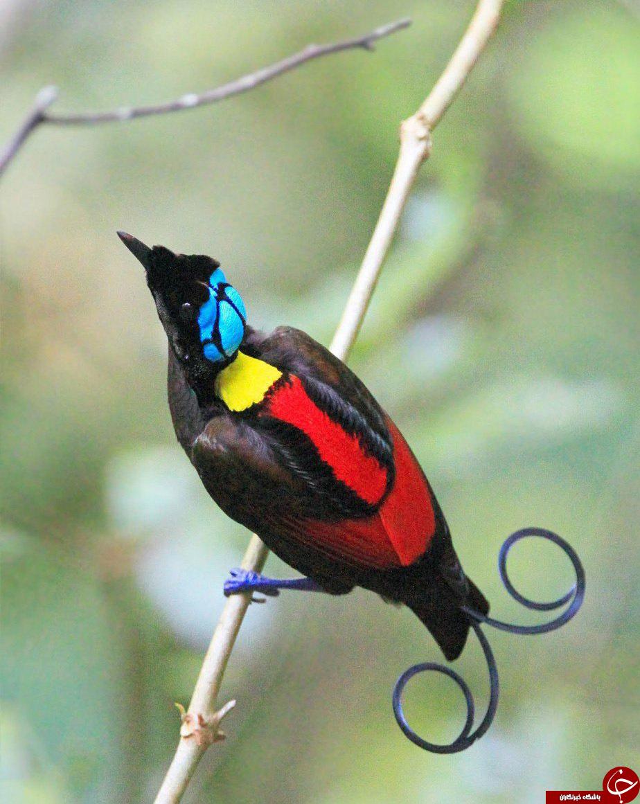 پرندگان شگفت انگیز عکس