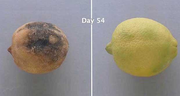 نگهداری طولانی مدت از میوه و سبزیجات با پوشش Edipeel + ویدیو