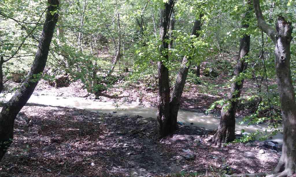یکی از جنگل های روستای رودبار واقع در استان گلستان