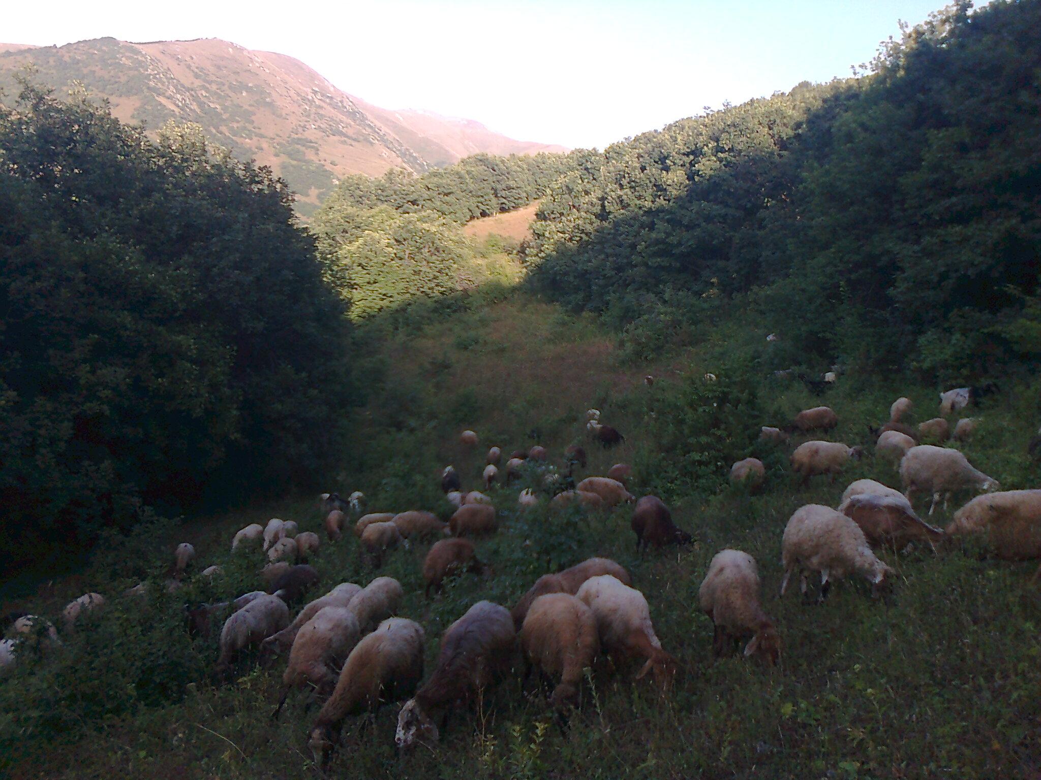 روستای کلاثور کلیبر