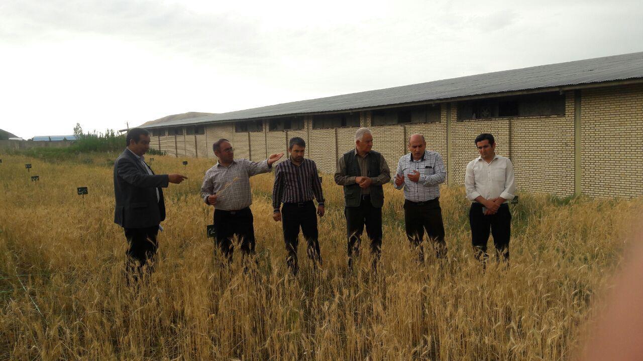 انجام پروژه های علمی تحقیقی در کنار کارهای اجرایی توسط مدیریت جهاد کشاورزی