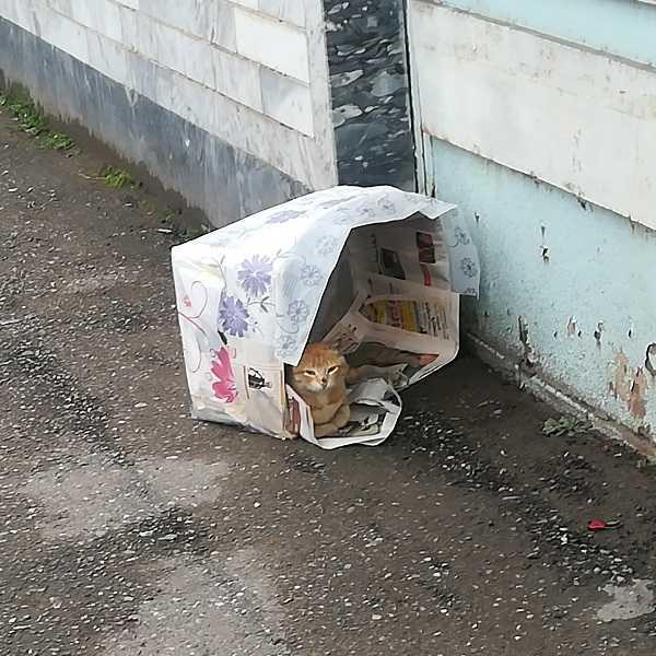 [عکس: 3uf1_cat-2018--.jpg]