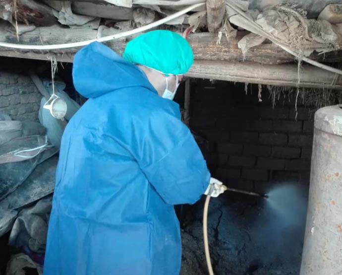 سمپاشی دامها جهت پیشگیری از تب کریمه کنگو در گلستان