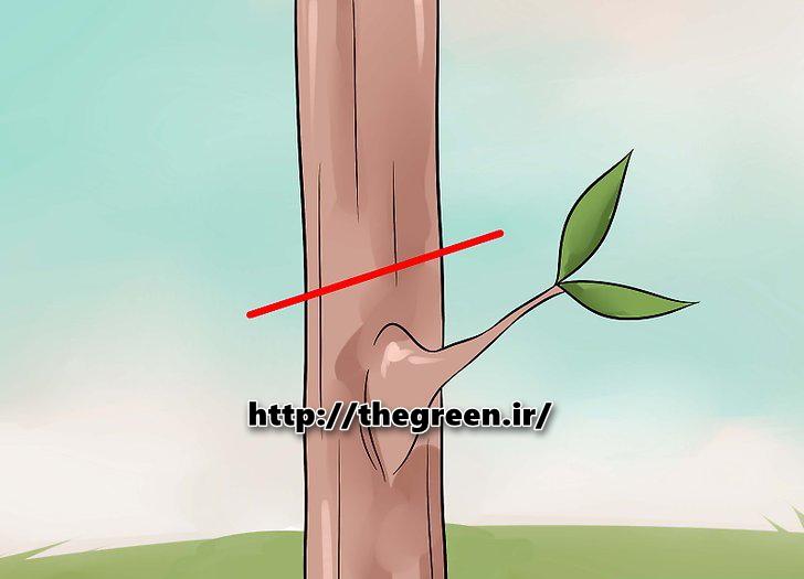 پیوند شکمی (تصویری مرحله به مرجله گرافیکی)