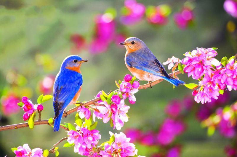 تصاویر طبیعت بهاری زیبا