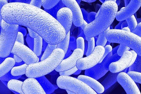 میکروبها اینترنت دارند