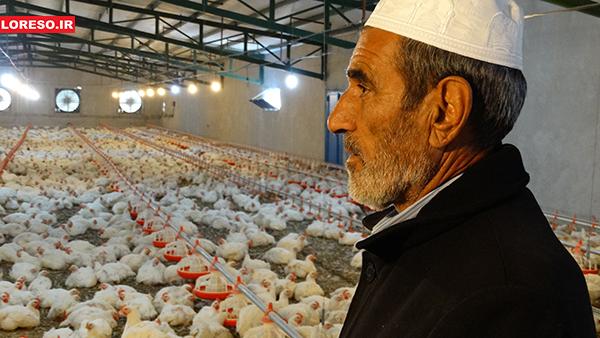 بازدید مدیر جهاد کشاورزی سلسله و گروه خبری لرسو از مجتمعهای پرورش مرغ الشتر