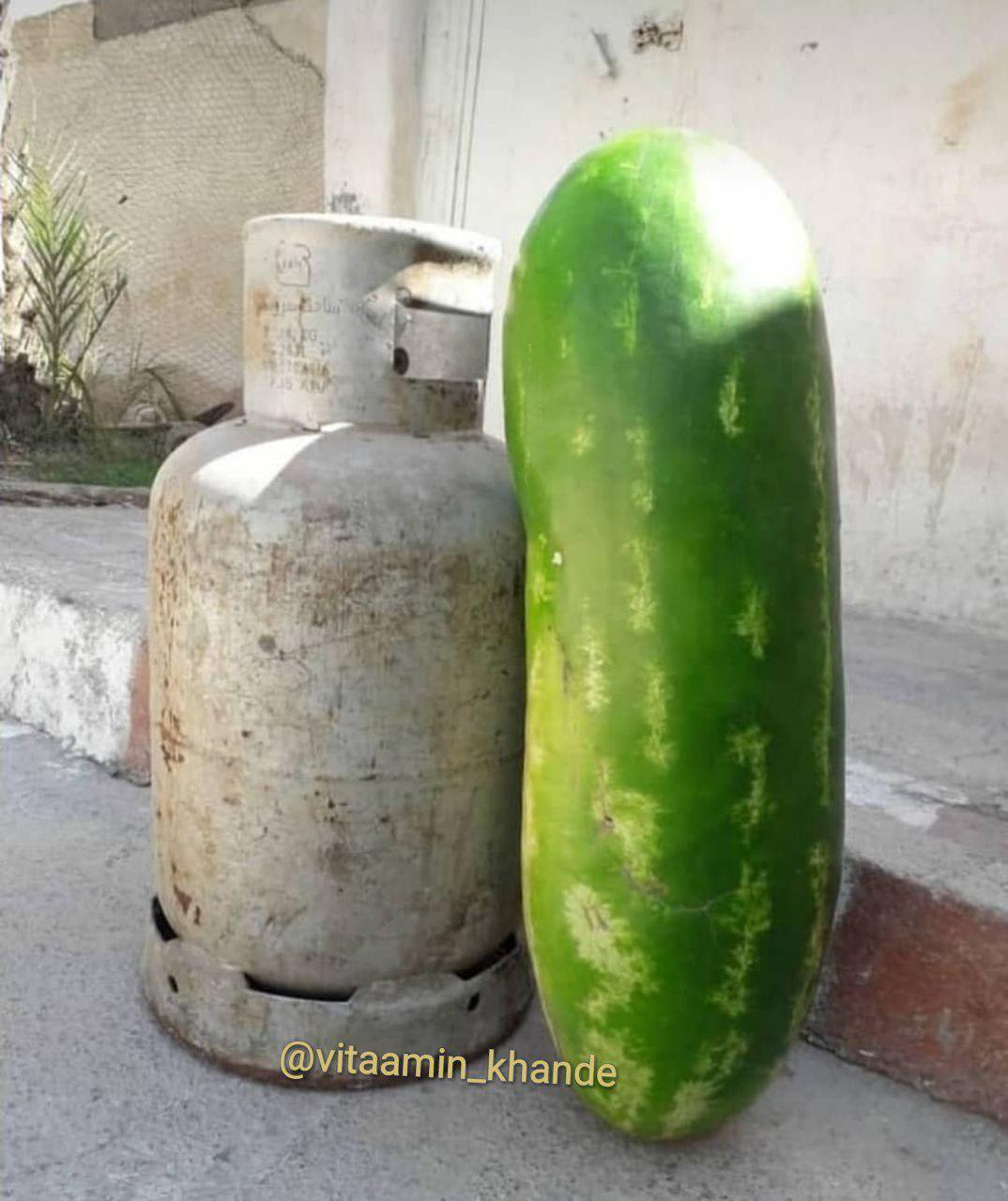 خنده دار ترین عکس که شب یلدا به اشتراک گذاشته شد