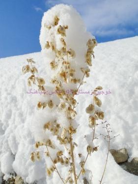 بارش برف سنگین در روستای خوجین ، خوجین. بارش برف سنگین ، کولاک در خوجین و خلخال ، بارش سنگین برف در خوجین و خلخال زمستان 95