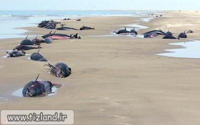 کشف علت خودکشی دلفین ها