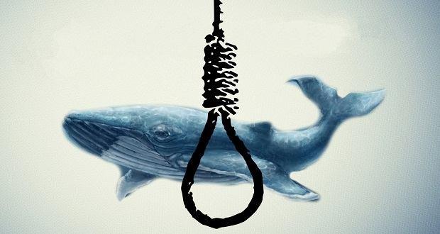 بازی نهنگ آبی شروعی برای پایان زندگی است؛ هرآنچه باید در مورد بازی نهنگ آبی بدانید