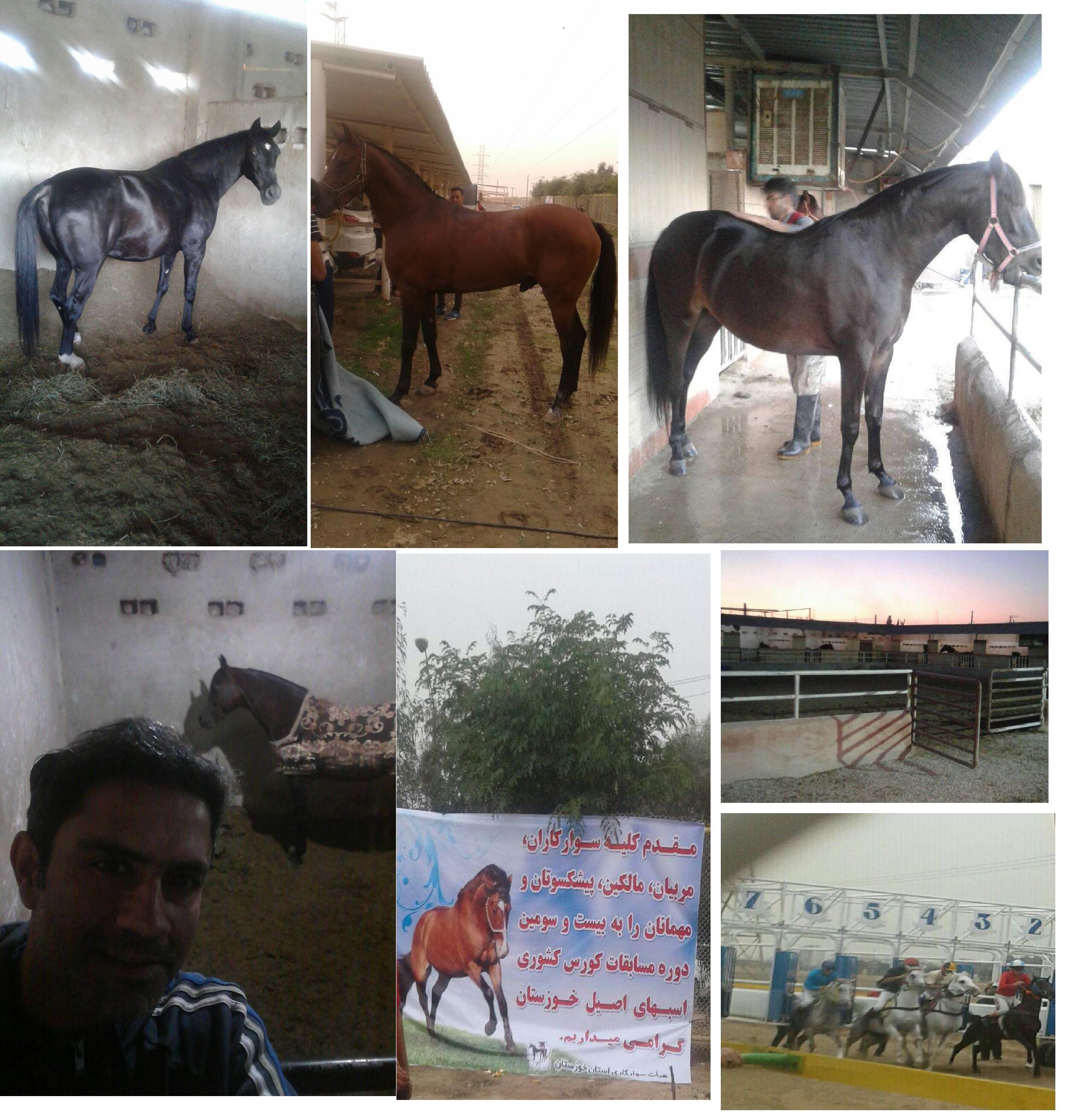 a7oa_khoozestan_kolli.jpg