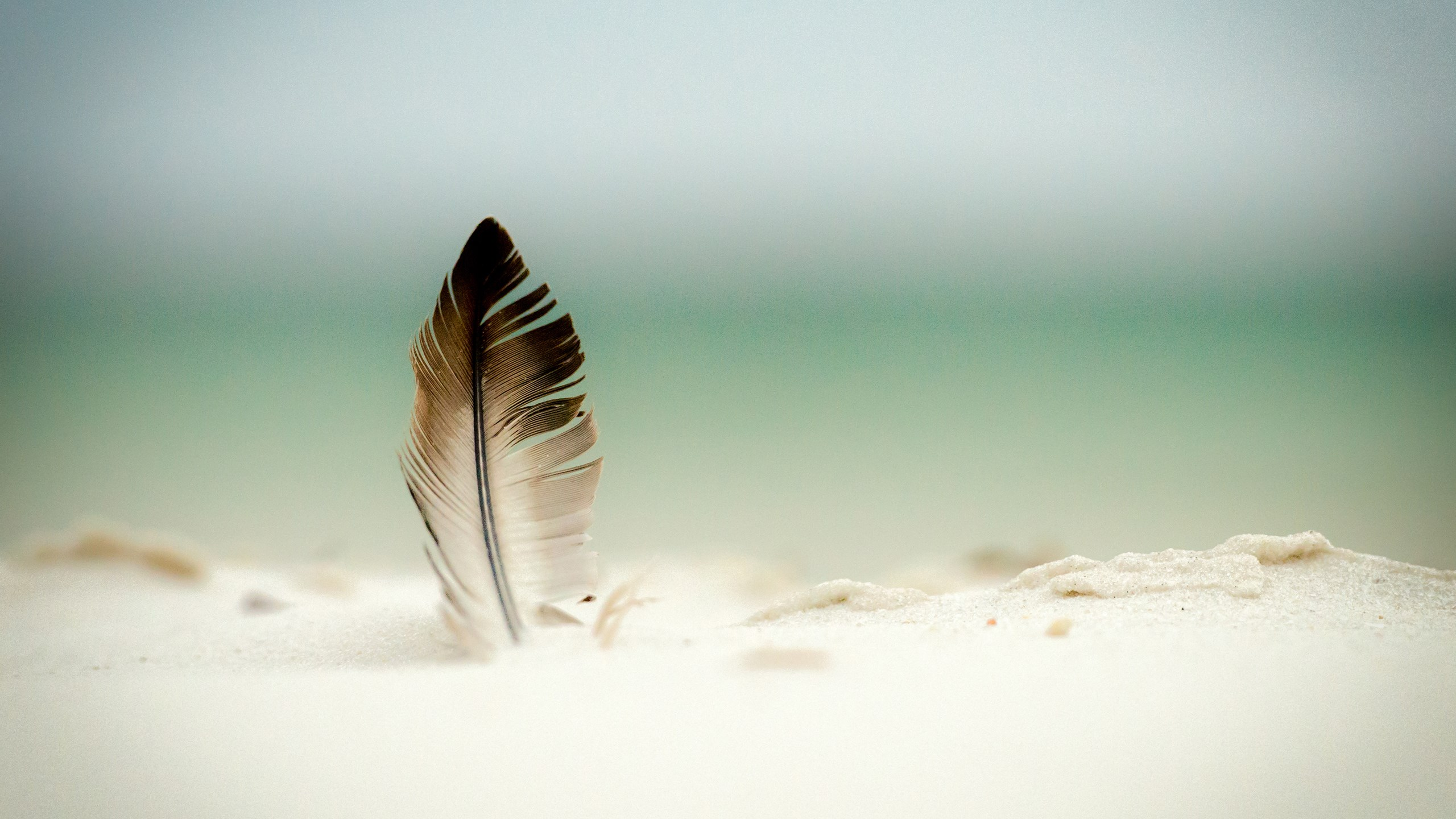 beye_66869952-feather-wallpapers.jpg