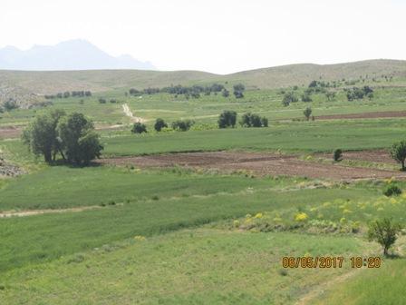 مزرعه دیدنی شیروطن بتلیجه در دوربین سال 96