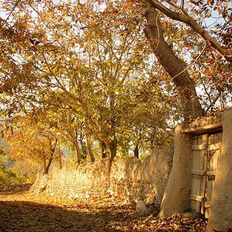 روستای گردو چوب