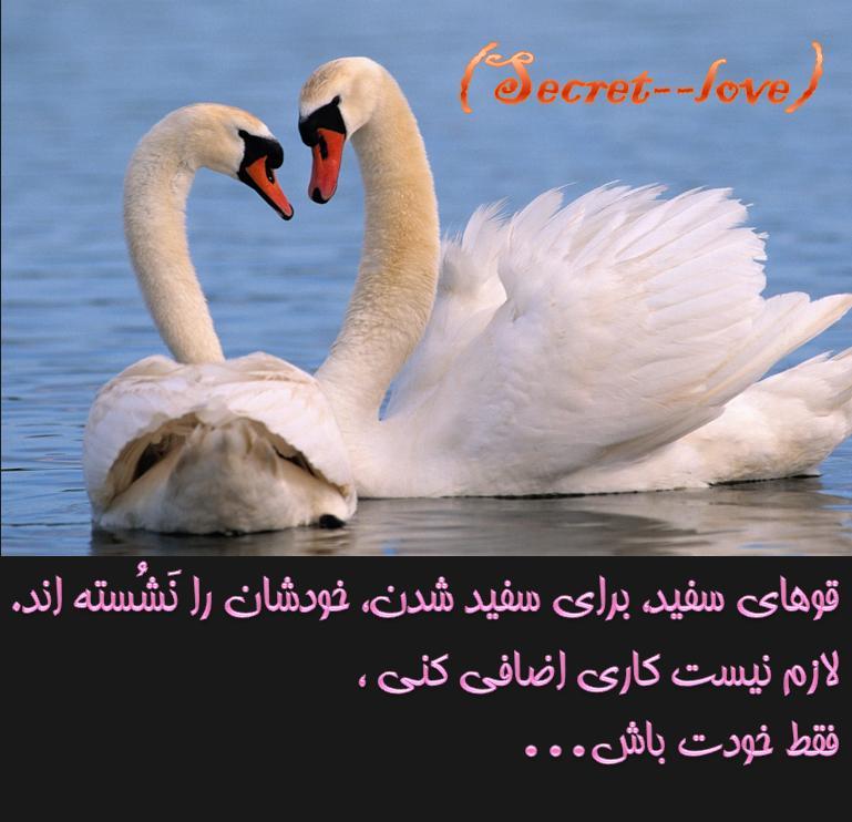 cx56_ghoohay_e_sefeed.jpg