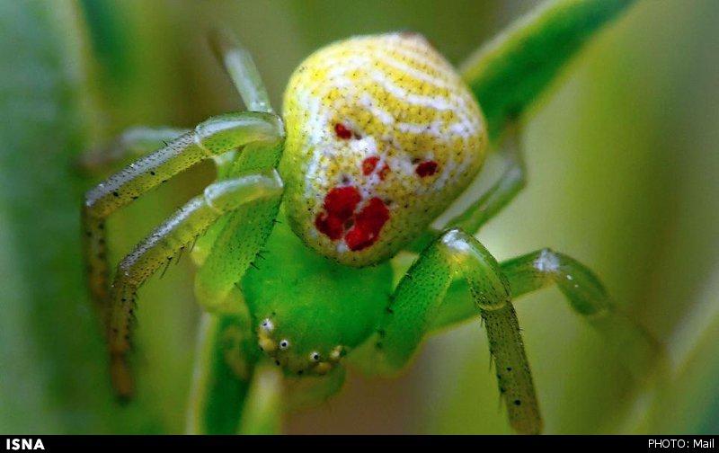 چهره های عجیب حشرات