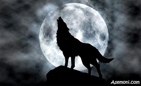 [تصویر:  dvwa_whether-human-or-humanoid-wolf-werewolf-there7.jpg]