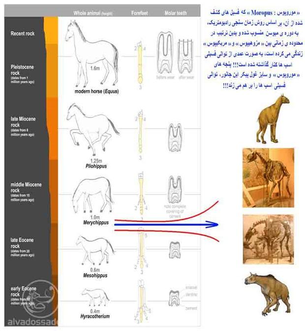 نقد علمی تکامل اسب ها
