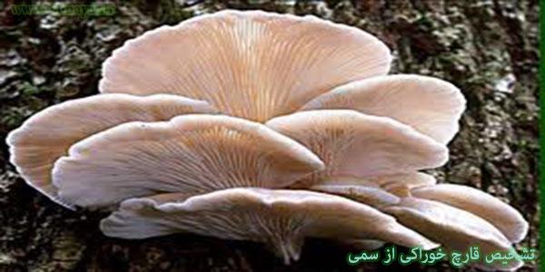 واقعیت امر این است که تشخیص قارچ سَمّی از قارچ خوراکی بسیار مشکل است