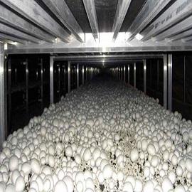 تجهیزات سالن پرورش قارچ