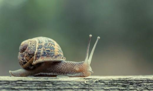 ۱۷ واقعیت جالب در مورد چیزهای معمولی که شما را حیرت زده خواهند کرد