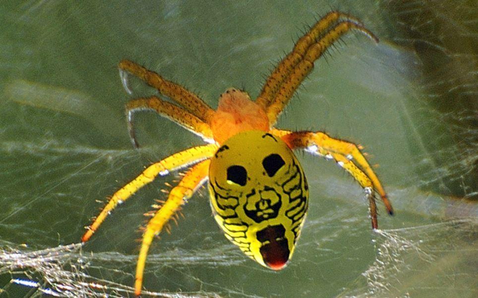 حشرات شبیه به صورت انسان