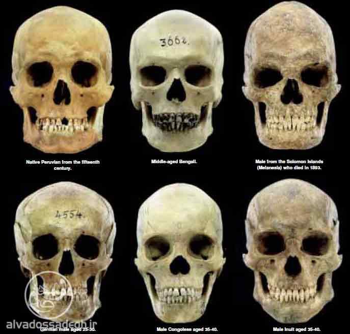 نقد تکامل جمجمه انسان امروزی