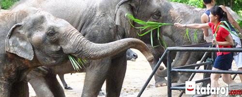حیات وحش خائو خئوی تایلند