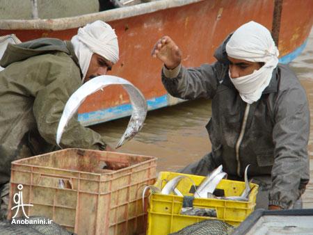 ماهیگیری در هرمز Fishing in Hormuz