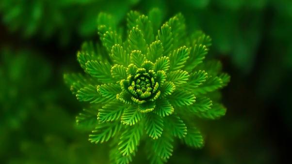 والپیپر اچ دی گل گیاه کاج