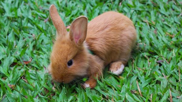 والپیپر اچ دی خرگوش