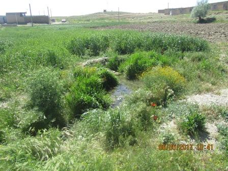 چشمه ای که بعد سالها در خیابان شهید خسروی بتلیجه جوشید