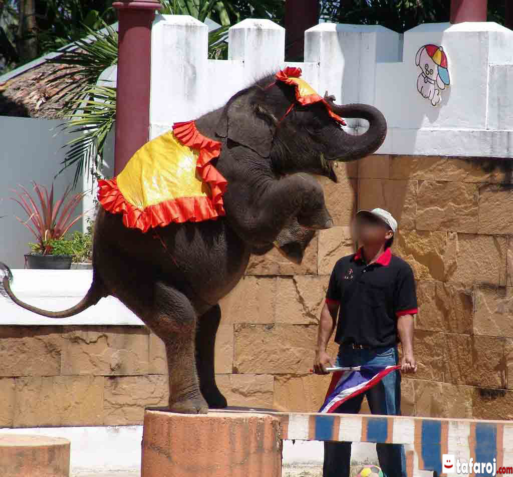 باغ وحش پوکت تایلند