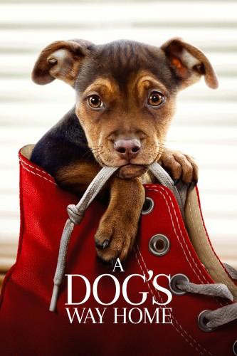 دانلود فیلم A Dogs Way Home 2019