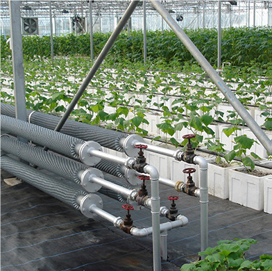 Irrigation and feeding the greenhouse