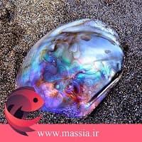 خواص درمانی صدف ها بکار رفته در انگشتر مردانه و زنانه صدف ماسیا
