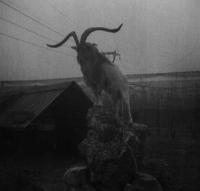 داستان ترسناک شکارچی جن دره