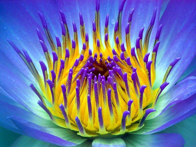 [تصویر: rank_flower21.jpg]