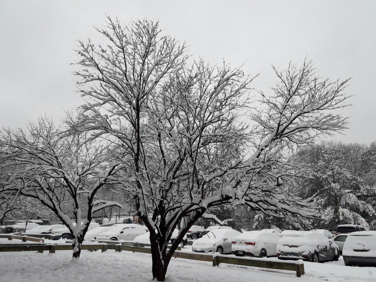 حربر برف