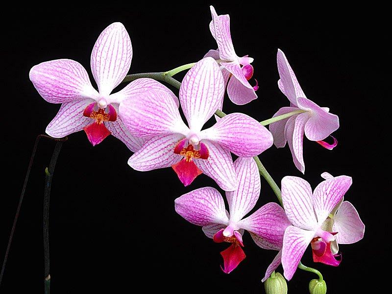 [تصویر: rzg_flower41.jpg]