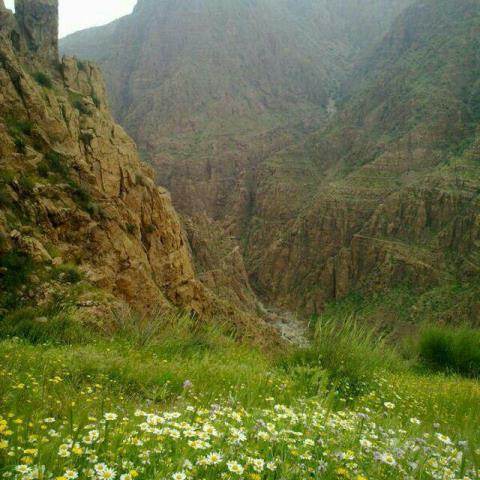 ضرورت-حفاظت-بيشتر-از-مناطق-طبيعي-و-حیات-وحش-شهرستان-ملكشاهي