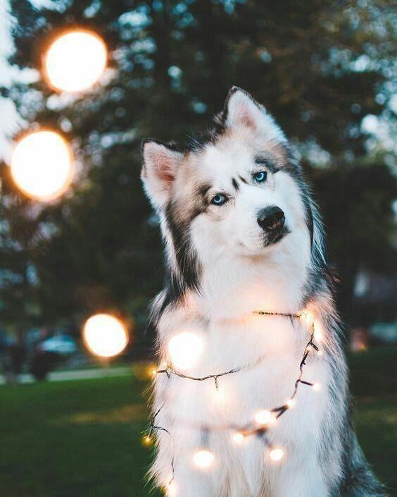 سگ | Dog 1