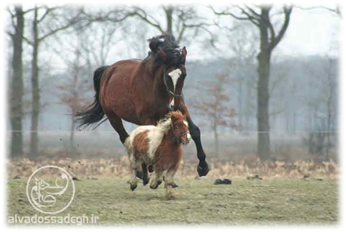 نقد تکامل اسب ها