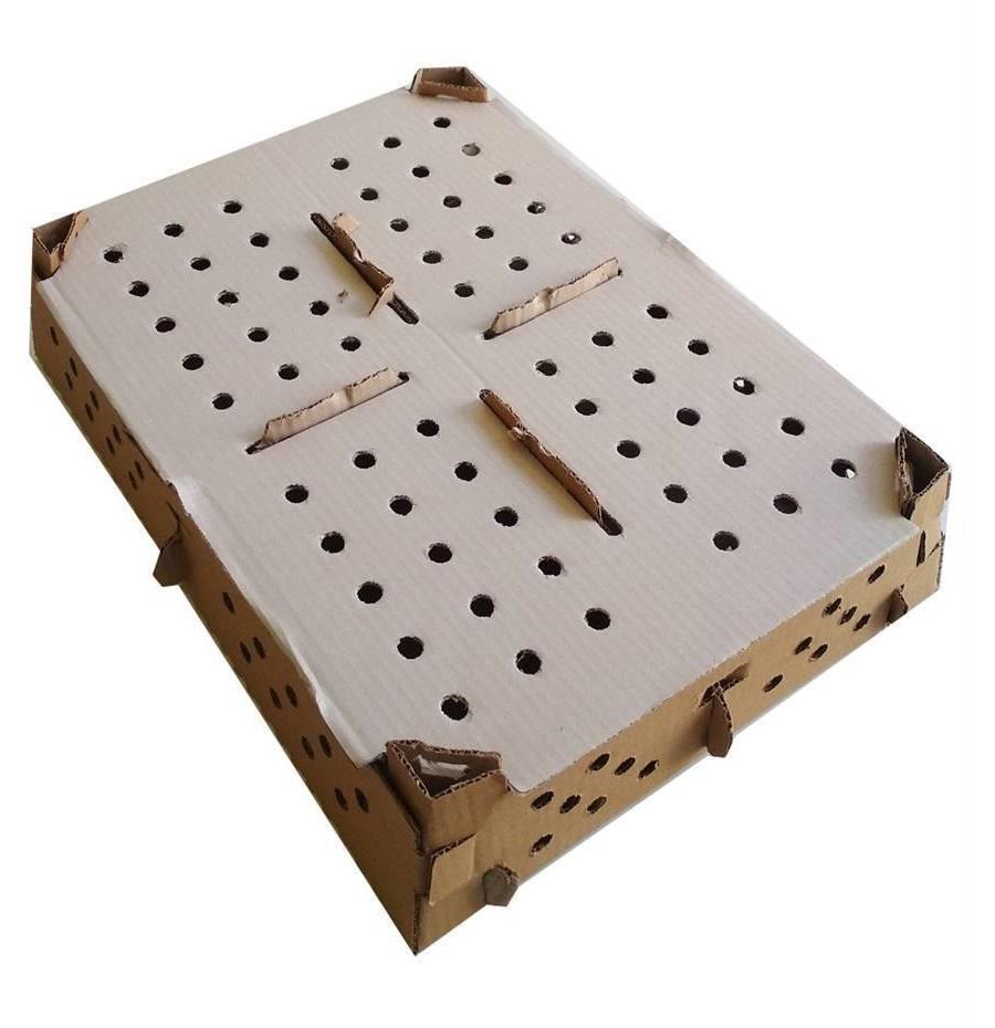 جعبه حمل جوجه یکروزه