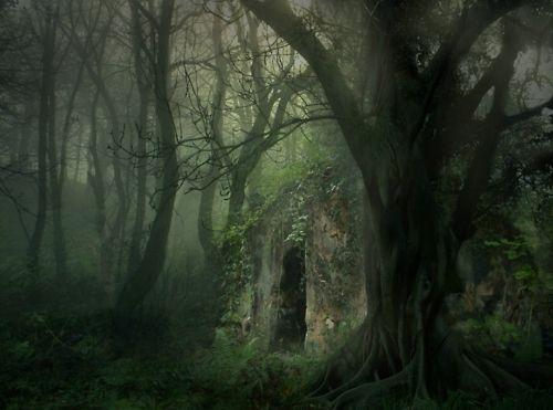 عکسهای از جنگل های عمیق تاریک