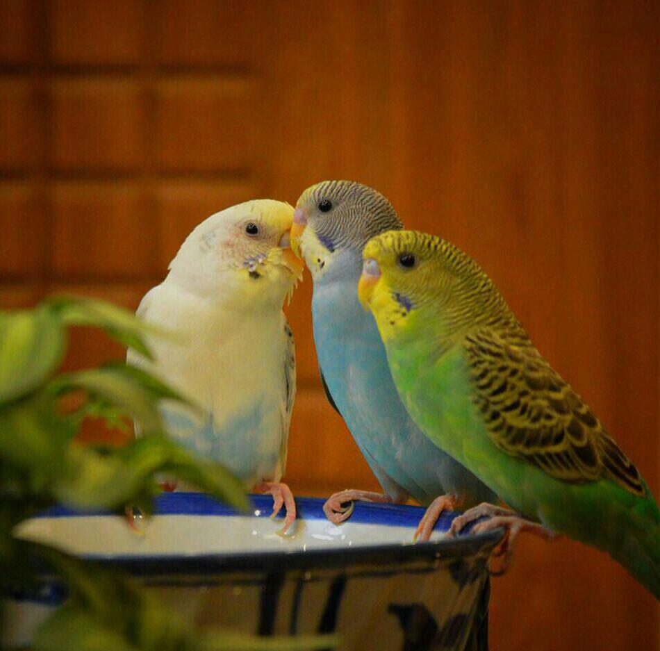 عکس پرندگان زیبا در وبلاگ ☆ دنیـای زیبـای مـن ☆