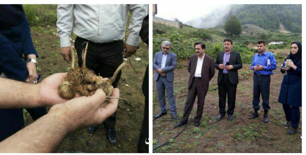 روستای زیارت مستعد کشت زعفران و گیاهان دارویی می باشد