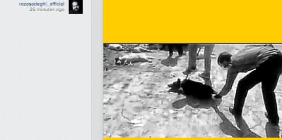 رضا صادقی ، واکنش رضا صادقی به حیوان آزاری در شیراز